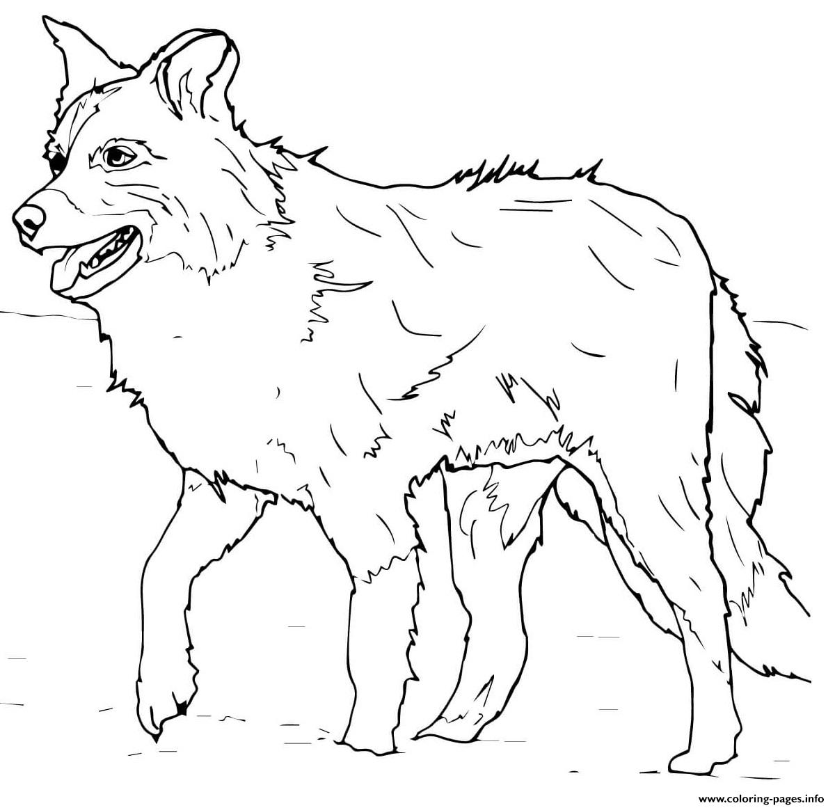 Scotch Sheep Dog Or Border Collie Coloring Pages Printable