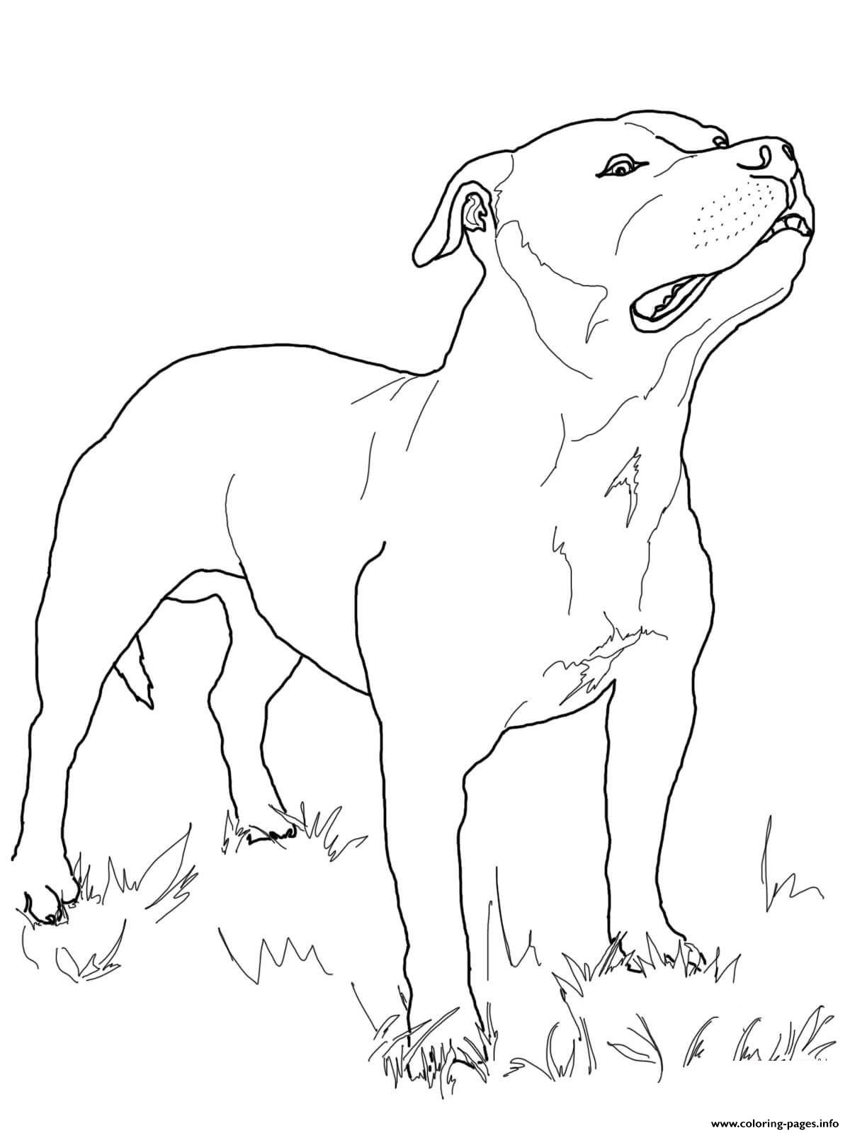 Australian Terrier Dog Coloring Pages Printable