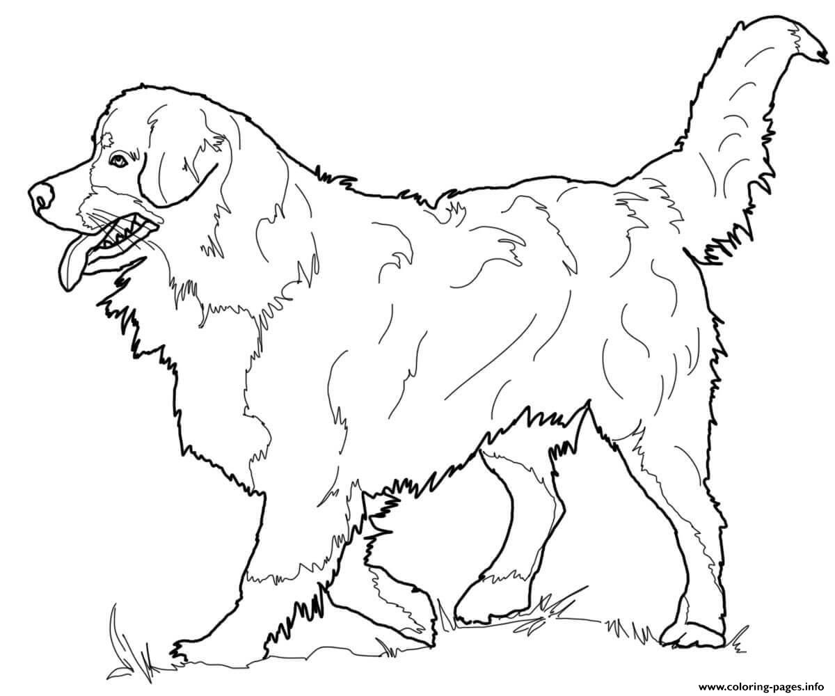 bernese mountain coloring pages printable