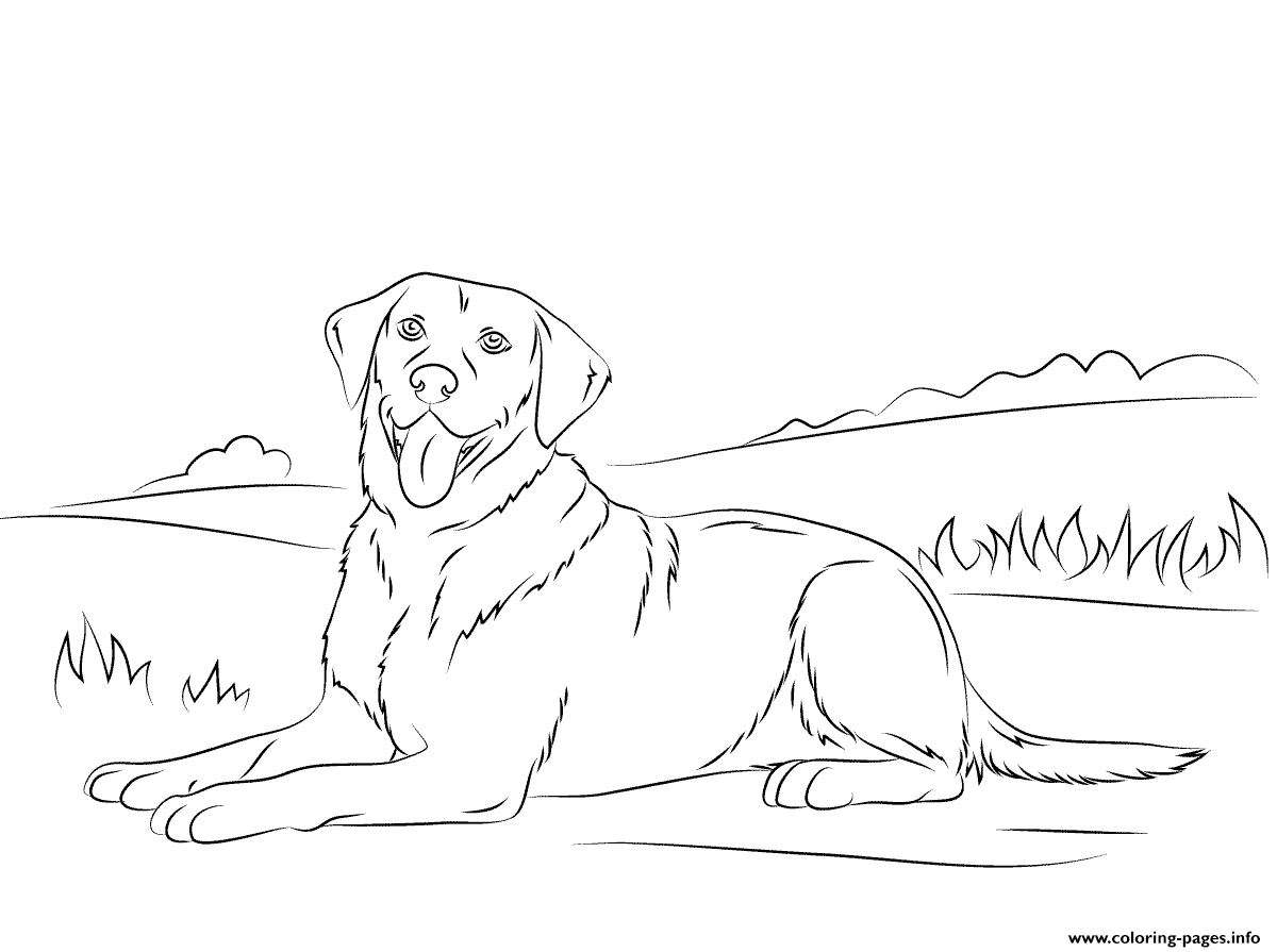Labrador Retriever Cute Dog Coloring Pages Printable