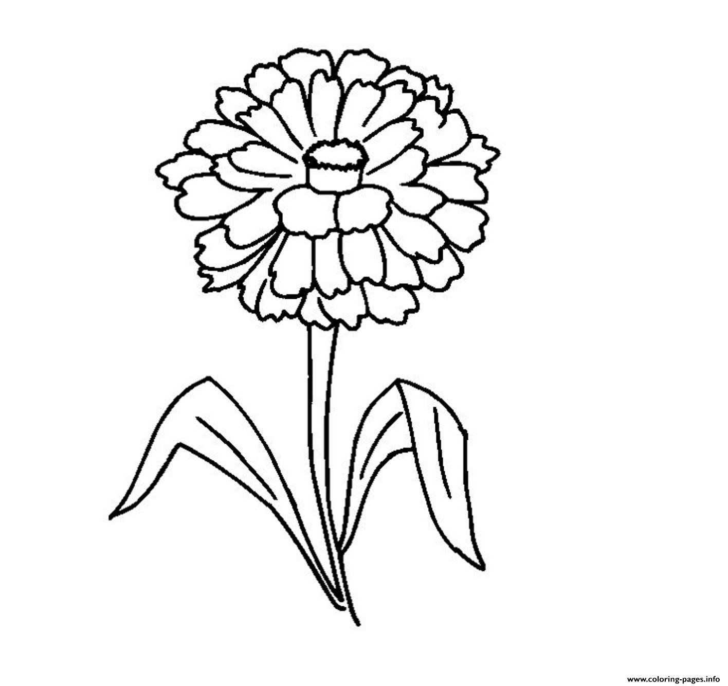 Zinnia Flower Coloring Pages Printable