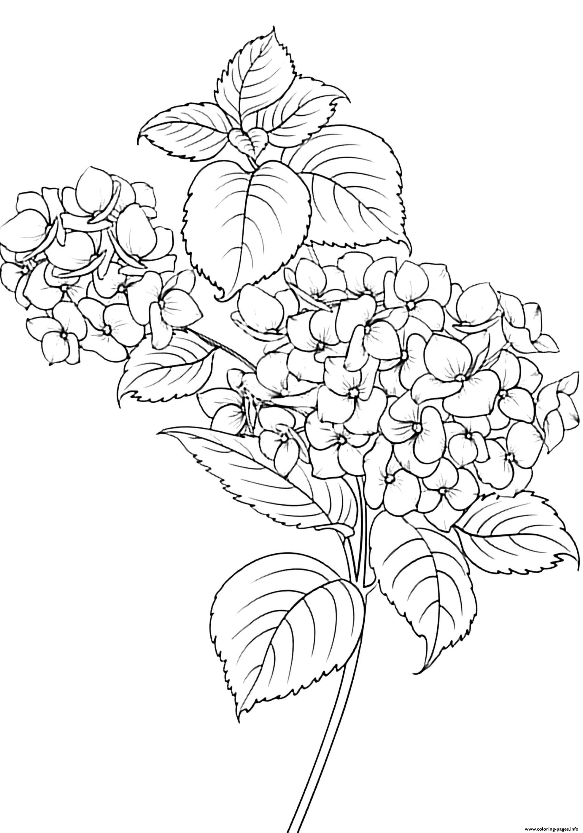 Elegant Flowers And Leaves Coloring Pages Printable