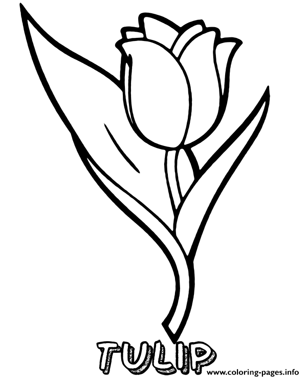 - Tulip Flower Printable Coloring Pages Printable