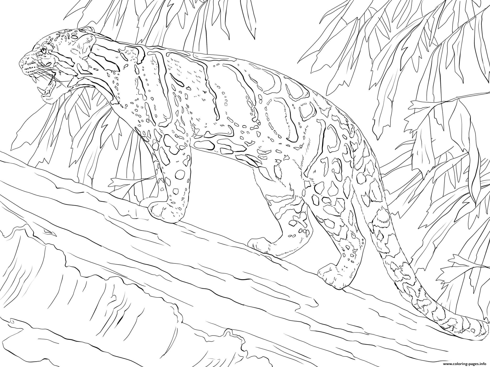 Clouded Leopard Standing On Tree Coloring Pages Printable