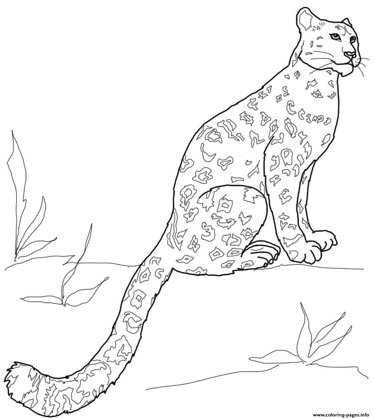 27 besten schneeleopard malvorlage  beste malvorlagen