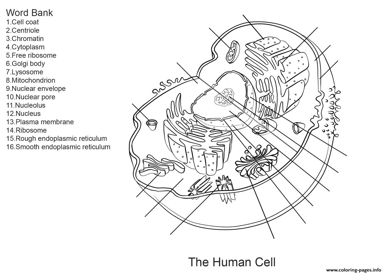 Animal Cell Coloring Diagram Photo Album Diagrams Fecbfffeceeadedd ...   899x1267
