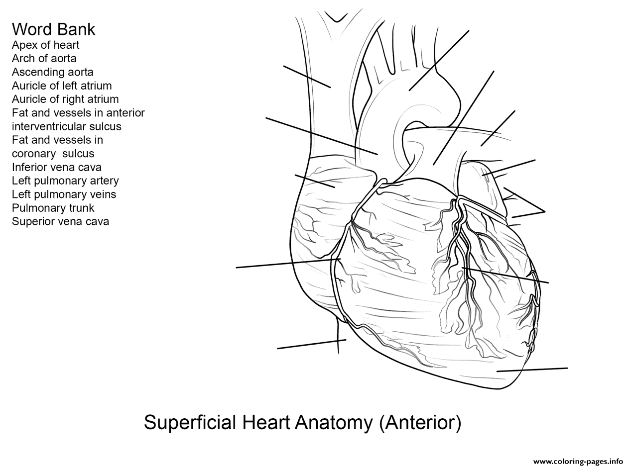 Human Heart Coloring Pictures For Kids Health Pictures of Anatomy ... | 941x1267