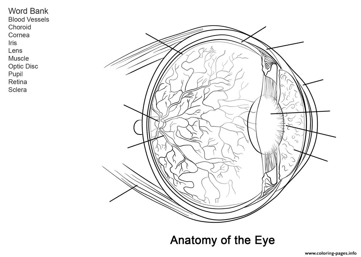 Human Eye Anatomy Worksheet Coloring Pages Printable