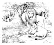 Printable adult africa lions coloring pages