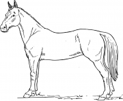 horse s for free1e6d coloring pages