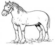 Print english horse sdc4f coloring pages