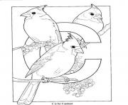 Printable free s alphabet c is for cardinal birds11aa coloring pages