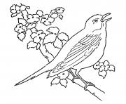 Print birds preschool s zoo animals7984 coloring pages