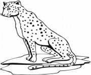 Print cheetah print out s animal19de coloring pages