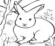 rabbit s printable animals626d coloring pages