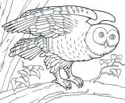 Print animal barn owl s5551 coloring pages