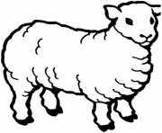Print animal sheep b01d coloring pages