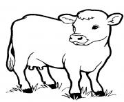 little cow preschool s farm animalsbb1f coloring pages