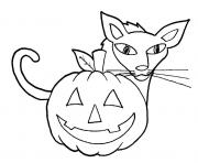 Print easy halloween cat and pumpkin s for kindergarten27d9 coloring pages
