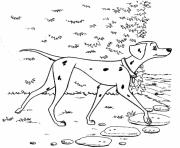 Printable female dalmatian 6cc7 coloring pages