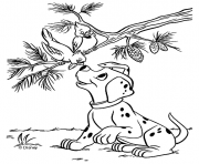 Print dalmatian and birds 9e6b coloring pages