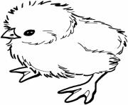 adorable easter s baby chicks16ec coloring pages