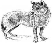 Printable adult real wolf coloring pages