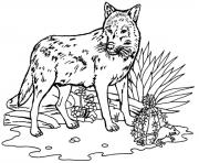 realistic wolf s to print coloring pages