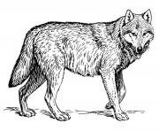 wolf s to print out coloring pages