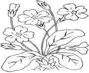 kids flowers s7c59 coloring pages