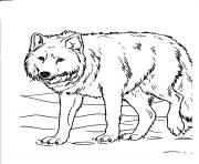 wolves coloring sheets for kids877f