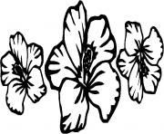 Print hibiscus flower s for kids6095 coloring pages