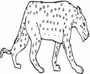 Print cheetah print out s for kids0392 coloring pages