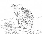 Print kids falcon bird s9c0f coloring pages