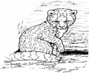 Print baby cheetah s for kids9ec0 coloring pages
