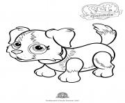 Print pet parade cute dog border collie 1 coloring pages