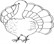 turkey easy thanksgiving s printables9f11 coloring pages