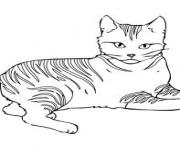 sharp eyed cat kittenc520 coloring pages