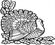 Printable November Turkey coloring pages
