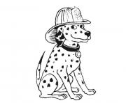 dalmatian fire dog sf2a7