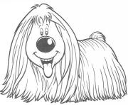 long haired dog  e144938749445347ae