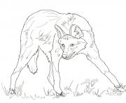 maned wolf coloring pages