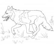 Printable running mexican grey wolf coloring pages