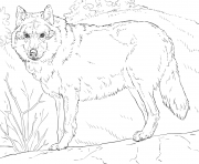 grey wolf 2 coloring pages