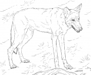 Printable red wolf coloring pages