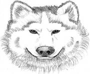 realistic wolf face  coloring pages