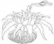 umbrella mural coloring close up bromeliad reverse by jan brett coloring pages