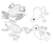 umbrella mural coloring frogs by jan brett coloring pages