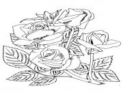 Printable four roses a4 coloring pages