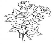 Printable three rosas a4 coloring pages